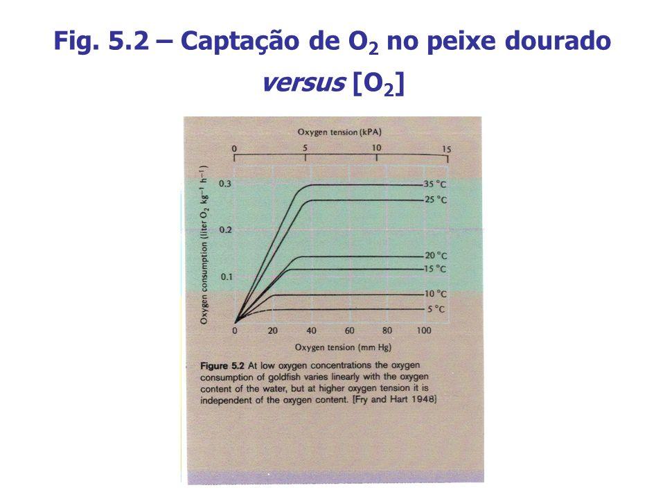 Fig. 5.2 – Captação de O2 no peixe dourado versus [O2]